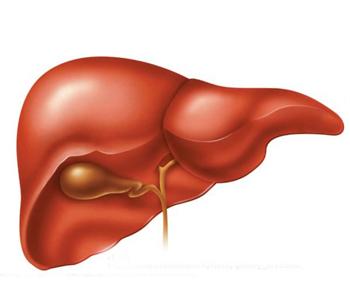 Что лучше фосфоглив или эссенциале при гепатите